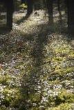 Floresta do outono Fotografia de Stock Royalty Free