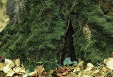 A floresta do outono Fotos de Stock