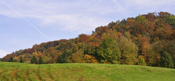 Floresta do outono foto de stock royalty free
