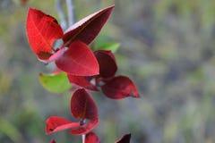 Floresta do outono as cores de árvores do outono Foto de Stock