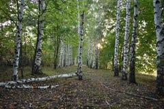 Floresta do outono as cores de árvores do outono Imagens de Stock Royalty Free