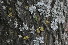 Floresta do outono as cores de árvores do outono Fotos de Stock