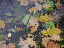 A floresta do outono classificada sae sob a opinião superior do gelo Fotos de Stock