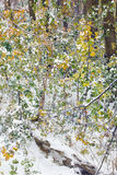 Floresta do outono coberta com a neve Imagens de Stock