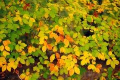 floresta do outono com opinião das folhas fotografia de stock