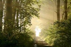 Floresta do outono com raias do sol do amanhecer fotografia de stock royalty free