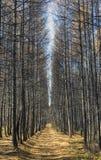 Floresta do outono com raios da luz morna, de folha dourada illuminating e de trajeto de passeio imagem de stock royalty free