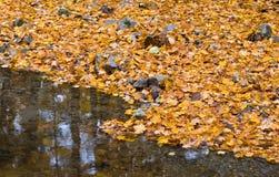 Floresta do outono com ribeiro pequeno e folha alaranjada Foto de Stock