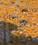 Floresta do outono com ribeiro pequeno e folha alaranjada Fotografia de Stock