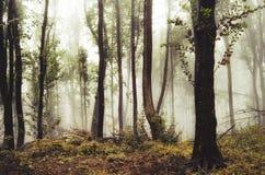 Floresta do outono com vegetação e névoa amarelas Imagens de Stock Royalty Free