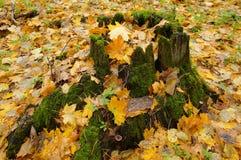 Floresta do outono, coto musgoso foto de stock royalty free