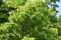 Floresta do outono da floresta do outono as cores de árvores do outono Fotos de Stock Royalty Free