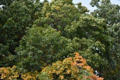 Floresta do outono da floresta do outono as cores de árvores do outono Fotografia de Stock Royalty Free