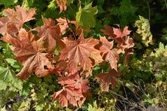 Floresta do outono da floresta do outono as cores de árvores do outono Foto de Stock Royalty Free
