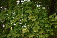 Floresta do outono da floresta do outono as cores de árvores do outono Fotos de Stock