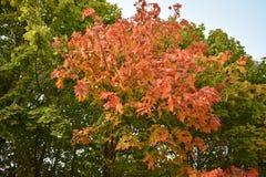Floresta do outono da floresta do outono as cores de árvores do outono Foto de Stock
