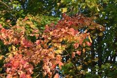 Floresta do outono da floresta do outono as cores de árvores do outono Imagem de Stock Royalty Free