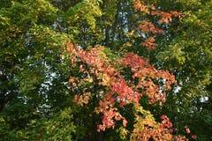 Floresta do outono da floresta do outono as cores de árvores do outono Fotografia de Stock