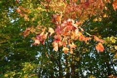 Floresta do outono da floresta do outono as cores de árvores do outono Imagens de Stock