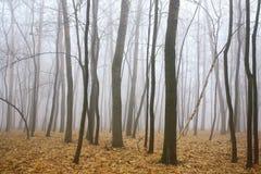 Floresta do outono da névoa da manhã imagem de stock royalty free
