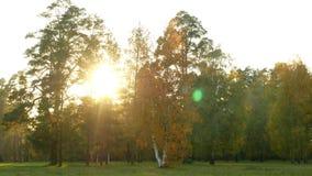 Floresta do outono da natureza video estoque