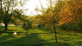 Floresta do outono da natureza filme