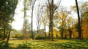 Floresta do outono da natureza vídeos de arquivo