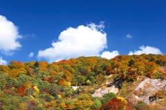 Floresta do outono de encontro ao céu azul Fotos de Stock Royalty Free
