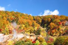 Floresta do outono de encontro ao céu azul Fotografia de Stock Royalty Free