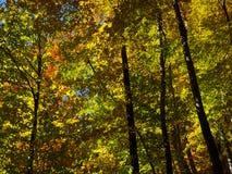Floresta do outono do brilho Fotos de Stock Royalty Free