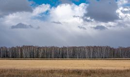 Floresta do outono e grama seca fotografia de stock royalty free