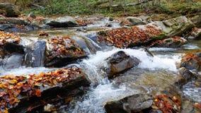 A floresta do outono e o sol que brilham através da folha Imagens de Stock Royalty Free