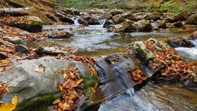 A floresta do outono e o sol que brilham através da folha Foto de Stock Royalty Free