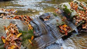 A floresta do outono e o sol que brilham através da folha Imagens de Stock