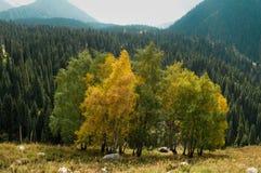 Floresta do outono em Cazaquistão imagens de stock royalty free