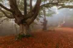 Floresta do outono em um dia nevoento do outono em Gorbea Imagens de Stock