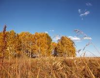 Floresta do outono em um fundo do céu azul com nuvens brancas foto de stock royalty free
