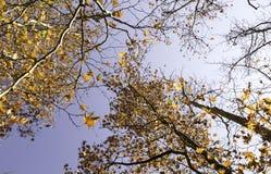 Floresta do outono, folhas Fotografia de Stock Royalty Free
