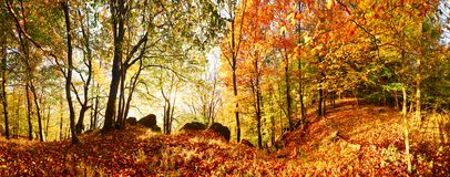 Floresta do outono na montanha no por do sol com sol imagem de stock