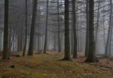 Floresta do outono na névoa fotografia de stock royalty free