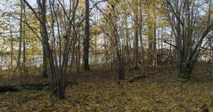 Floresta do outono na Suécia Escandinávia vídeos de arquivo