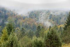 Floresta do outono nas montanhas Fotos de Stock
