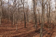 Floresta do outono Natureza de outubro fotografia de stock royalty free