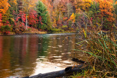 Floresta do outono pelo lago fotos de stock