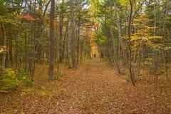 A floresta do outono, toda a folha é pintada com cor dourada no meio da estrada de floresta Foto de Stock Royalty Free
