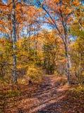 A floresta do outono, toda a folha é pintada com cor dourada no meio da estrada de floresta Fotografia de Stock