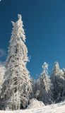floresta do país das maravilhas Fotografia de Stock