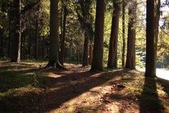 Floresta do parque do outono Imagem de Stock