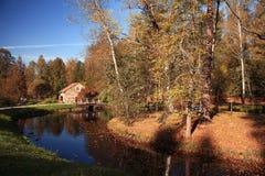 Floresta do parque do outono Imagens de Stock