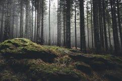Floresta do pinheiro da calha da fuga de montanha Fotos de Stock Royalty Free